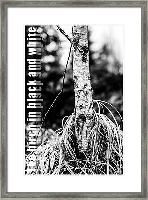 The Birch In Black And White Framed Print by Tommytechno Sweden