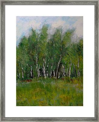 The Birch Trees On Maple Ridge Framed Print