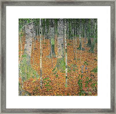 The Birch Wood Framed Print