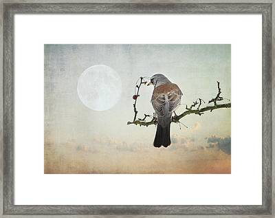 The Bird And The Moon Framed Print by Heike Hultsch