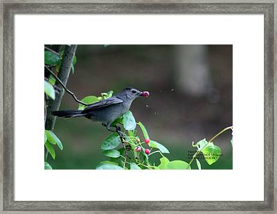 The Bird  Framed Print