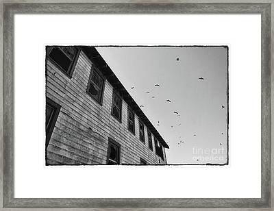 The Birds Framed Print by Ana V Ramirez