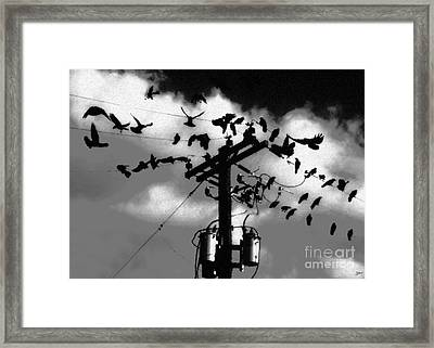 The Birds Framed Print by David Lee Thompson