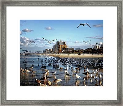 The Birds Framed Print by Jim Hill