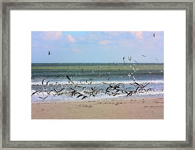 The Birds Framed Print by Kristin Elmquist