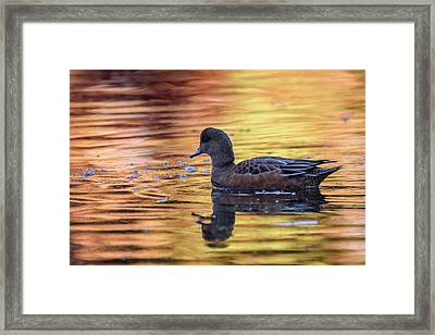 The Birds Of Autumn No. 4 Framed Print
