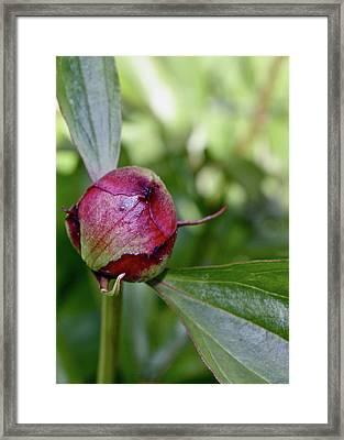 The Birth Of A Flower Framed Print by Tori Kadera
