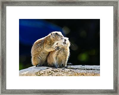 The Bite Framed Print