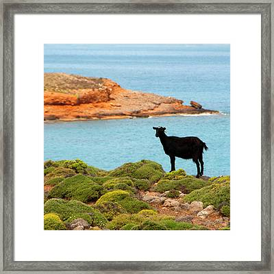 The Black Cheep Framed Print by Manolis Tsantakis