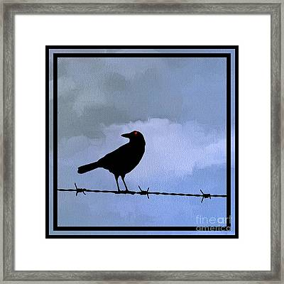 The Black Crow Knows Blue Framed Print