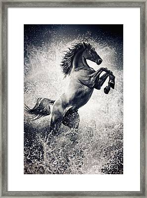 The Black Stallion Arabian Horse Reared Up Framed Print