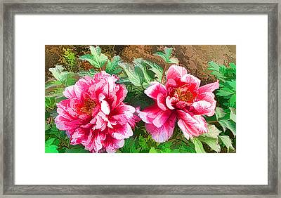 The Blossom Of Prosperity 1 Framed Print by Lanjee Chee