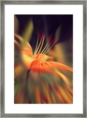 The Blossoming Lily 2 Framed Print