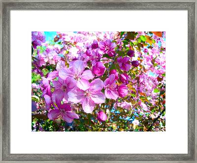 The Blossoms Of Spring Framed Print