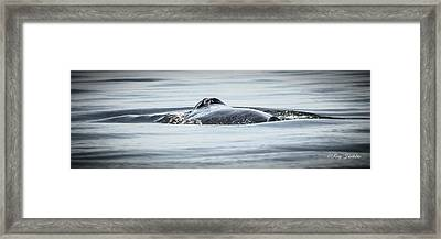 The Blow Hole Of A Humpback Whale Framed Print