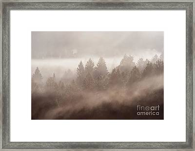The Blow Of The Forest Framed Print