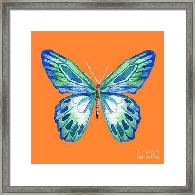 The Blue Butterfly Framed Print by Alondra Hanley