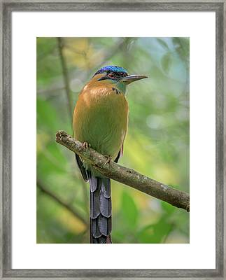 The Blue Crown Framed Print