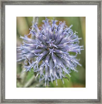The Blue Flower Framed Print