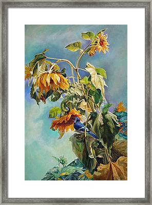 The Blue Jay Who Came To Breakfast Framed Print by Svitozar Nenyuk