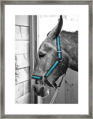 The Blue Mule Framed Print by Edward Myers