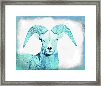 Framed Print featuring the photograph The Blue Ram by Jennie Marie Schell