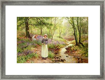 The Bluebell Glade Framed Print by Ernest Walbourn