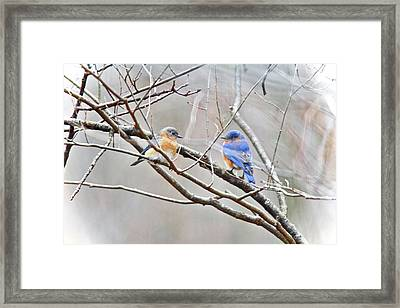 The Bluebirds Of Happiness Framed Print by Mother Nature