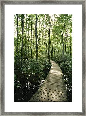 The Boardwalk Nature Trail In Great Framed Print