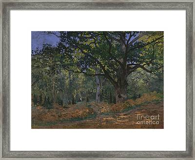 The Bodmer Oak, Fontainebleau Forest, 1865  Framed Print by Claude Monet