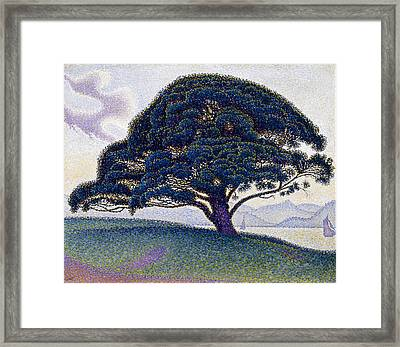 The Bonaventure Pine In Saint Tropez Framed Print by MotionAge Designs