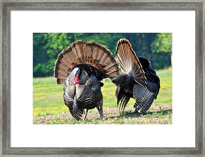 The Boys Framed Print by Todd Hostetter