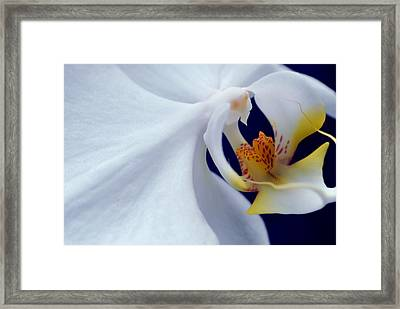The Bride Framed Print by Susette Lacsina