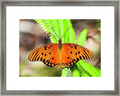 The Brilliance Of Passion Framed Print by Norman Johnson