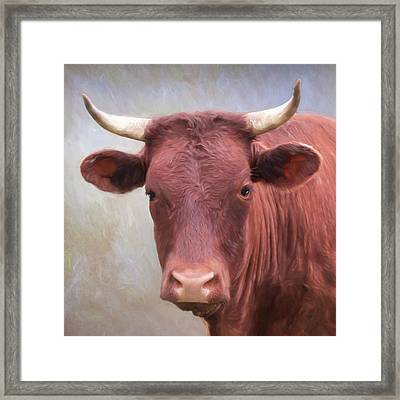 The Brown Bull Framed Print