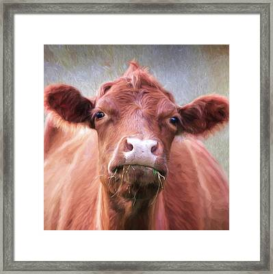 The Brown Cow Framed Print