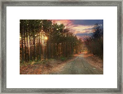 Framed Print featuring the photograph The Brown Path Before Me by Lori Deiter