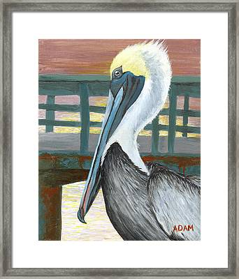 The Brown Pelican Framed Print