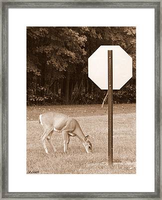 The Buck Might Stop Here Framed Print