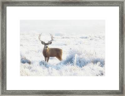 The Buck Stops Here Framed Print