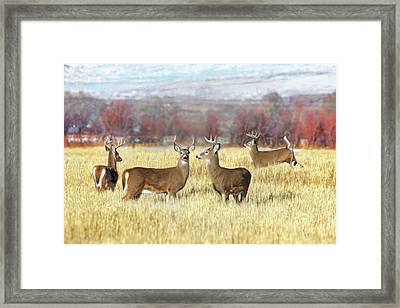 Framed Print featuring the photograph The Bucks Stop Here White-tail Deer  by Jennie Marie Schell
