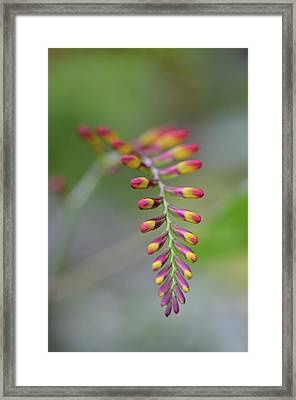 The Budding Arch Framed Print