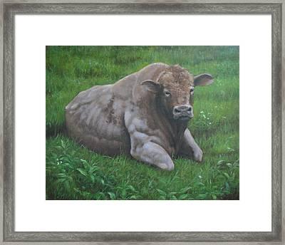 The Bull Framed Print by Stephen Howell