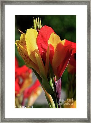 The Burning Flame Framed Print by Tracy Hall