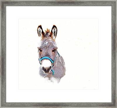 The Burro Framed Print by Robin Cox