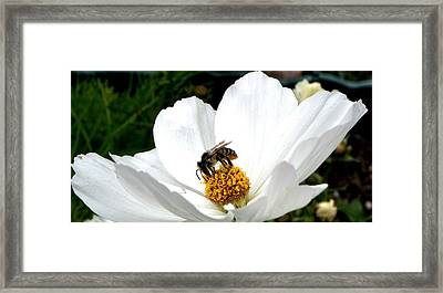 The Busy Bee Framed Print by Carol Grimes