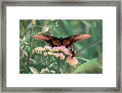 The Butterfly And The Bumblebee Framed Print