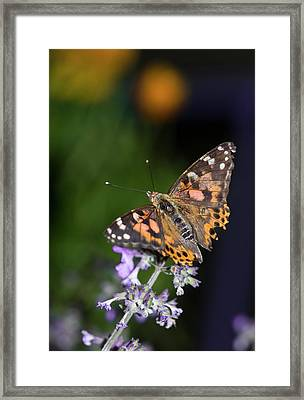 Framed Print featuring the photograph The Butterfly Effect by Alex Lapidus
