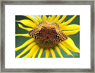 The Butterfly Effect Framed Print by Tina  LeCour