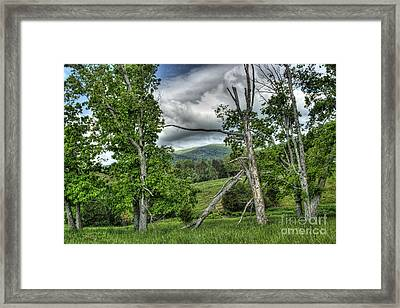 The Buzzard Trees Framed Print by Pete Hellmann